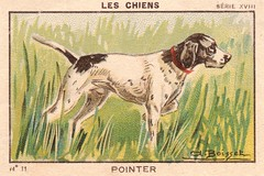 milliat chiens009