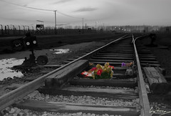 Hope on the rails of death (Inge Pettersen) Tags: wood railroad sunset sky blackandwhite bw flower fence sad dusk flash nazi poland rail line pole ww2 powerline ribbon treeline auschwitz genocide leading gravel birkenau concentrationcamp selectivecolor electic guardtower nofk