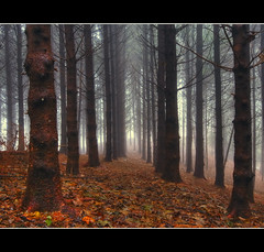 A Secret Path In A Misty Wood (Matteo Foiadelli) Tags: wood longexposure trees italy mist mountain nature leaves landscape nikon colours perspective sigma 1020 bergamo roncobello foiadelli d300s