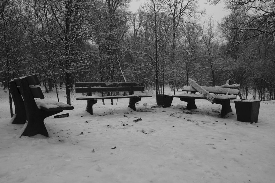 Wrocław / Snow / Park