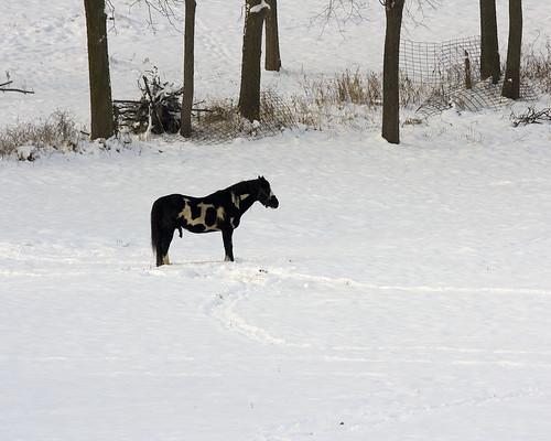 HorsePrairieRoad12272009JGWard_MG_3536