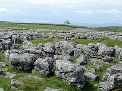 Limestone Pavement on New Close (Walruscharmer) Tags: england nationalpark yorkshire northyorkshire malham yorkshiredales pendlehill clintsandgrikes gordale lonesometree limestonescenery