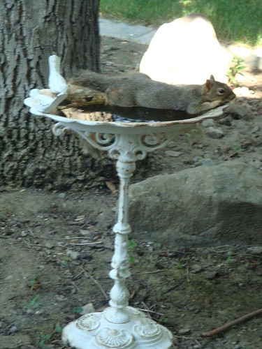 hot squirrel1