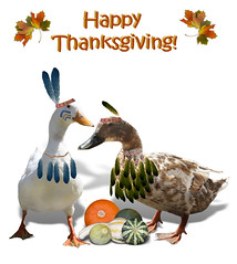 Indian Geese (Gravityx9) Tags: thanksgiving november holiday geese duck indian goose 000 pilgrim cafepress zazzle gcu redbubble envyofpsphotoart allbeautifulshots goosecalendar