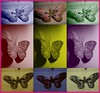 butterfly collage (Tasmin_Bahia) Tags: blue red colour green beautiful yellow collage butterfly purple butterflies colourful butterflycollage