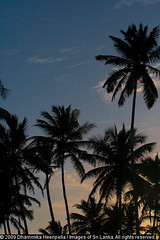 IMG_7543 (Dhammika Heenpella / Images of Sri Lanka) Tags: travel sunset vacation holiday travelling tourism silhouette interesting twilight scenery asia sitting southern rod srilanka southeast lk survival touristattraction downsouth coconuttrees holidaying scenicbeauty placesofinterest photosof midigama habaraduwa southernprovince dhammikaheenpella theimagesofsrilanka heenpalla visitsrilanka2011