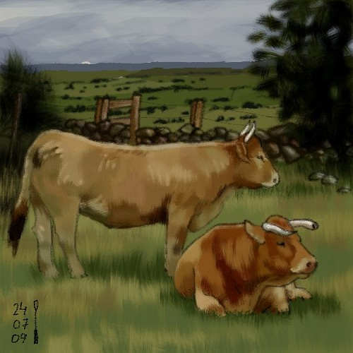 Cows, by LaLegraNegra