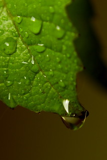 A leaf and a drop ...