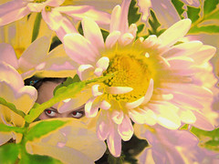 Pink Spy (Viki Quinn) Tags: pink flower floral girl yellow photoshop eyes spy daisy peeking redeyes lookingthrough uptonogood