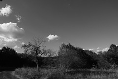 Government Canyon State Park (SuperEvilBrian) Tags: trees summer sky blackandwhite bw blancoynegro nature dry drought blancetnoir semiarid nikond80 mbd80 1735f28afs governmentcanyonstatepark