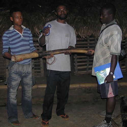 Ranger, a Maimai Major with his ivory