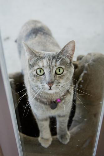 Let me in! [233/365]