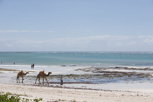 0716-1198 Diani - beach and camels.jpg