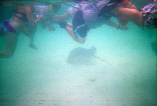 Sting Ray w/ Swimmers