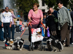 Proud mother of 10 (Neal Bingham) Tags: street woman pets cute london dogs square animallover mother trafalgar unusual quirky neal pushchair yawning walkies bingham nealbinghamcom
