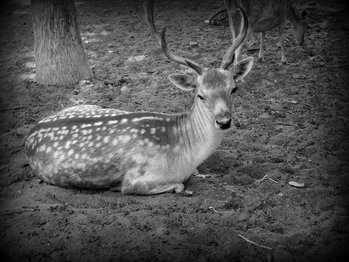 Giza Zoo حديقة الحيوان بالجيزة 001