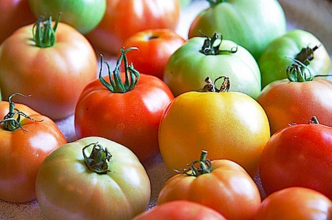 Red and green tomatoes, plus a lone yellow one - The Messy Baker