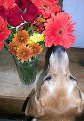 Flowers_Sophie_1009