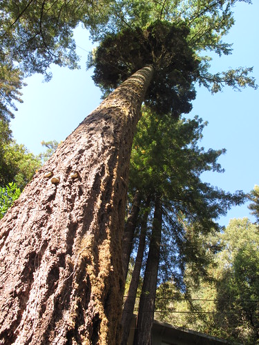 Redwood by Day