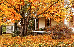 Mr. Brimsmaid's Front Yard (Baab1) Tags: trees windows colors decay fallcolors maryland autumnleaves autumncolors brightcolors oldhouses oldpaint porches southernmaryland farmhouses rottenwood oldwindows princefrederickmaryland calvertcountymaryland oldfarmhouses barstowmaryland marylandscenics calvertcountyscenics atomicaward