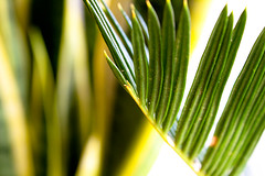 Cycad: New Growth?