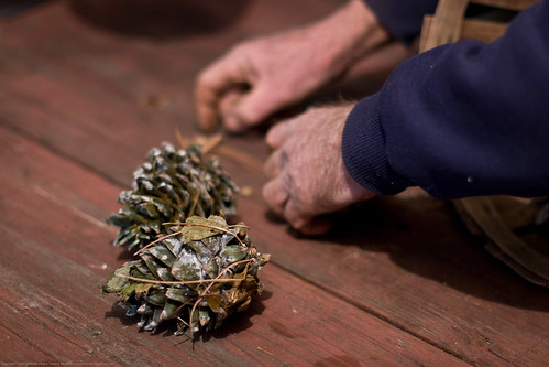 Edible Forest Gardens: korean pine cones