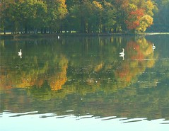 Swans in Reflction (Stanley Zimny (Thank You for 42 Million views)) Tags: autumn lake reflection birds composition wonderful alt swans img height src 190 205 rockland href width a autumnaward httpwwwflickrcomgroupsautumnineurope httpfarm1staticflickrcom20221545053740764d6bb371ojpg