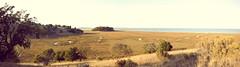 China Camp (Derek Wood Photography) Tags: ocean california field landscape golden panoramic fields sanfranciscobay sanrafel derekwood canon5dmark2 2818mm snakeyriver