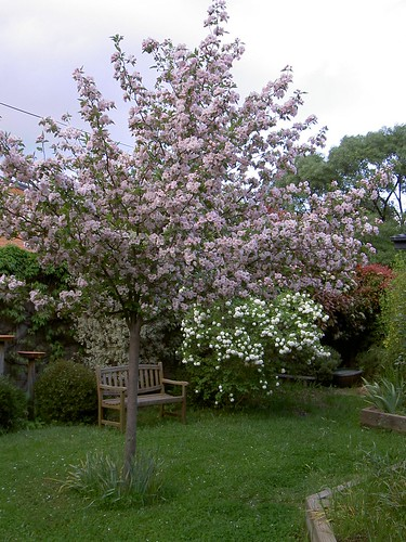 Back garden in late spring