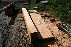 Sawdust in cut face (ebacherdom) Tags: wood tree mill face grain chainsaw chain cutting fir lumber milling douglasfir stihl chainsawing chainsawlumbermaking