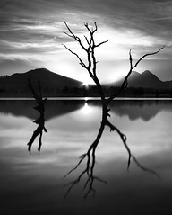 timeless dawn (domonFire) Tags: longexposure bw blur tree southafrica dam capetown simple 1022mm minimalist nd400 canon40d