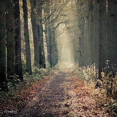 creepy woods... ({cindy}) Tags: autumn trees light brown mist green fall leaves forest vintage square woods path explore textures frontpage flypaper 500x500