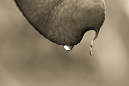 Drops (by niklausberger)