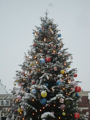 Christmas Tree in Markt, Delft (crwilliams) Tags: christmas snow tree netherlands delft date:month=december date:day=17 date:year=2009 date:hour=09 date:wday=thursday