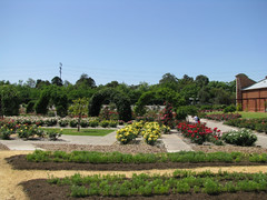 International Rose Garden