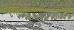 (sureshs!) Tags: crop land farmer chennai ecr cultivation tilling handtractor canon1000d