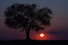 Old Wise One (dbushue) Tags: sunset tree field evening countryside illinois midwest colorful silence wise teach coth supershot naturesgarden infinestyle absolutelystunningscapes damniwishidtakenthat coth5 photocontesttnc11 dailynaturetnc11