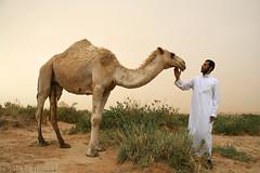 Hi that's me (TARIQ-M) Tags: texture landscape sand waves desert dunes camel camels riyadh saudiarabia بر الصحراء جمال الرياض صحراء رمال جمل ابل رمل طعس نياق المملكةالعربيةالسعودية canon400d الرمل ناقة خطوط نفود الرمال كثبان تموجات canonefs18200mmf3556is تموج tariqm نفد