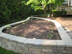 garden, June 2011