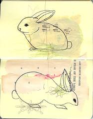 bunnies_pt1