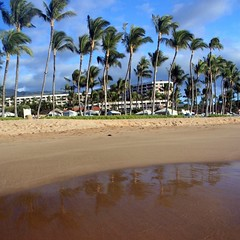 Palm trees reflected in the wet sands of Wailea Beach