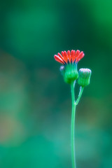 Regal (Scott Kasper Photography) Tags: red flower green bokeh crown bud regal narrowdof hbw ysplix