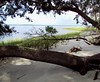 Riverbank, Amelia River (Fernandina Beach)