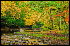 Beautiful October Day on the Alplaus (UpstateNYPhototaker) Tags: ny nature colors leaves landscape stream unitedstates foliage newyorkstate trout polarizer millpondpark saratogacounty nikond90 charltonny alplauskill nikkor18105vr upstatenewyorkphotography