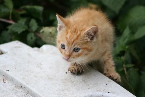 Little Orange Kitten Arrives