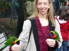 Cincinnati Zoo (gedwards05) Tags: ohio birds zoo cincinnati lorikeets