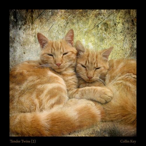 Tender Twins (2)