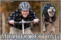 Schlittenhunderennen im Tierpark