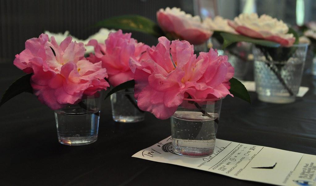 Camellia Show 11