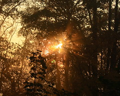 Sun (dmytrok) Tags: trees sun forest germany deutschland badenbaden baden wald schwarzwald blackforest bumen